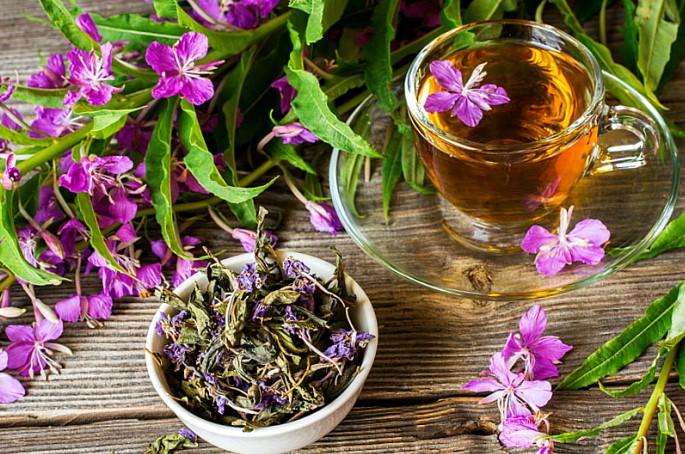 Мифы и правда про иван-чай